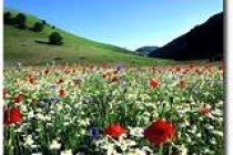 Cure naturali e bioterapie in Naturopatia